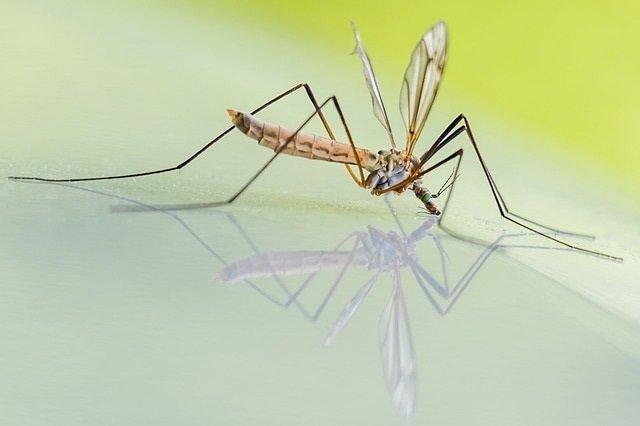 Waarom is een deet muggenspray zo effectief tegen muggen?'